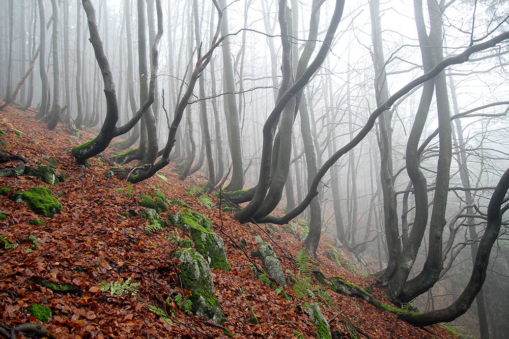 Ore Mountains, Czech Republic, trees, Pleßberg (Abertham, Sankt Joachimsthal)